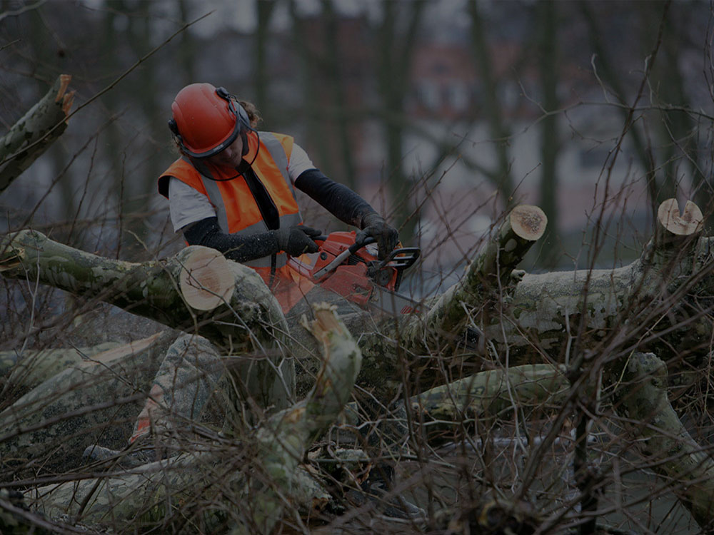 East Brunswick Tree Service